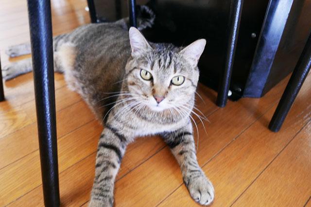 張本の猫1
