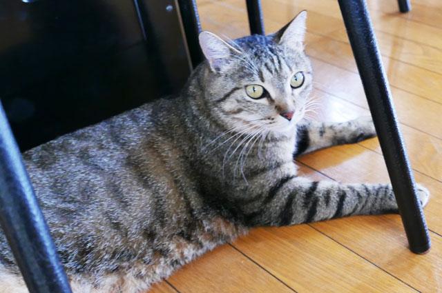 張本の猫2