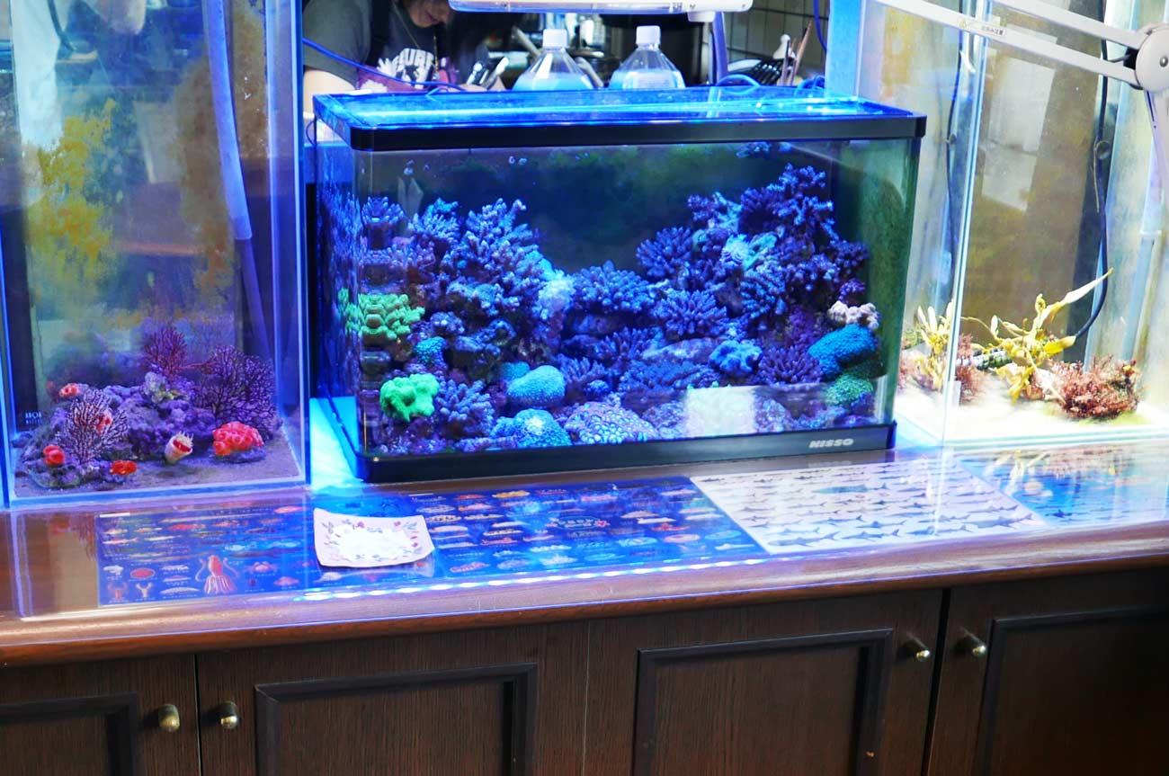 珊瑚の水槽の画像
