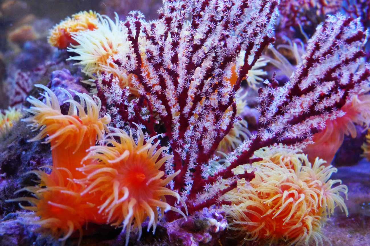 サンゴの花の画像