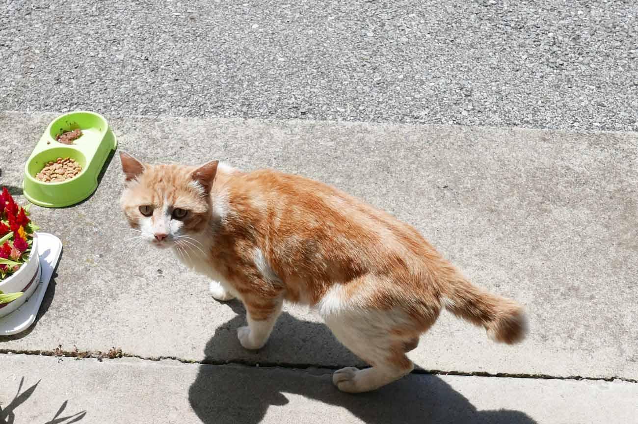 愛猫チロの画像