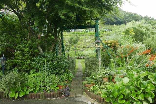マリヌスの庭の画像1