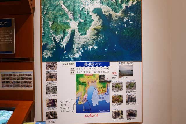 勝浦の海の生き物