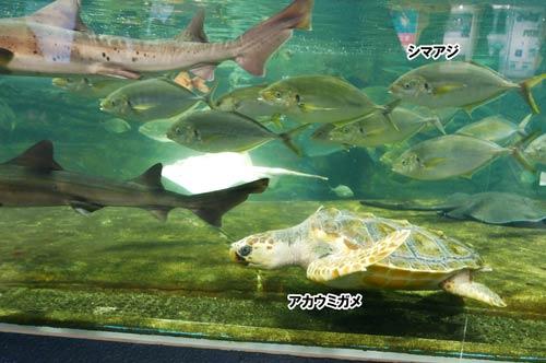 沖合いの魚