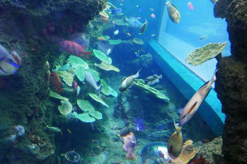 サンゴ礁の庭の画像