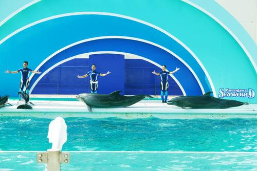 バンドウイルカの大ジャンプの画像