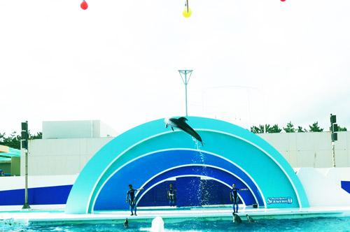 カマイルカの大ジャンプの画像