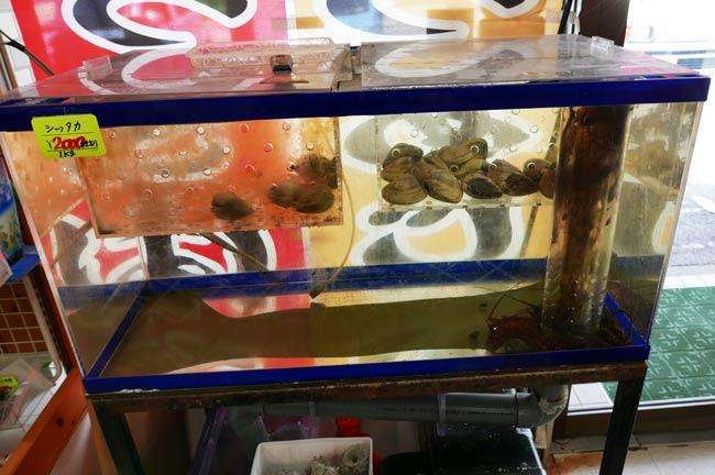 シッタカとホンビノス貝の画像
