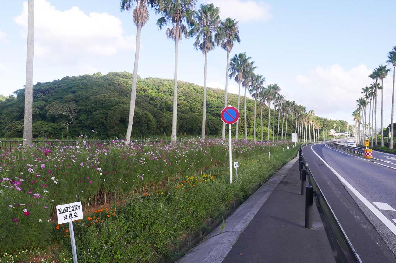 館山バイパス横の花壇