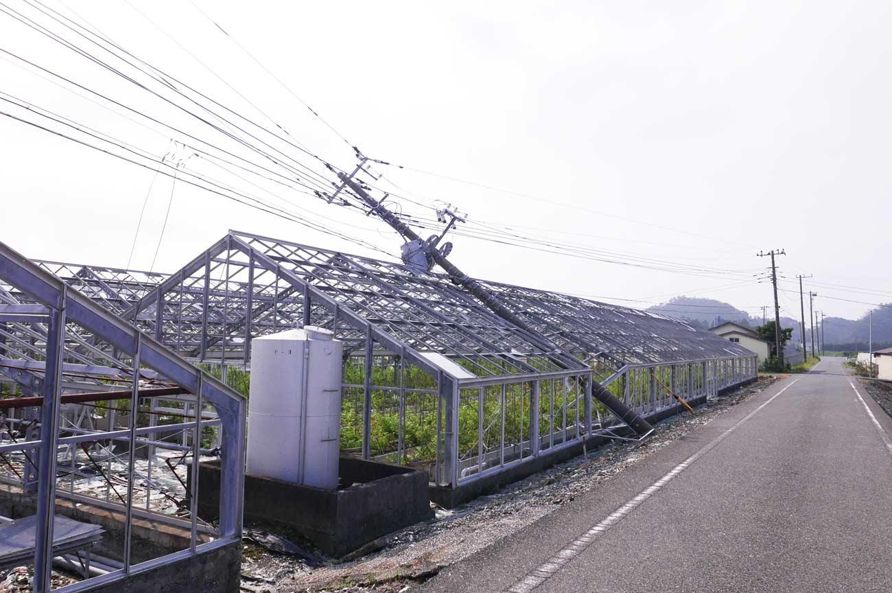 富浦のカーネーションハウス
