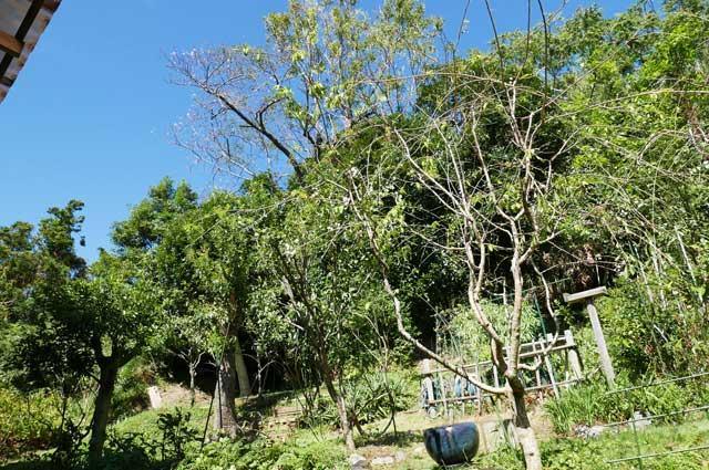 森のてーぶるの庭の画像