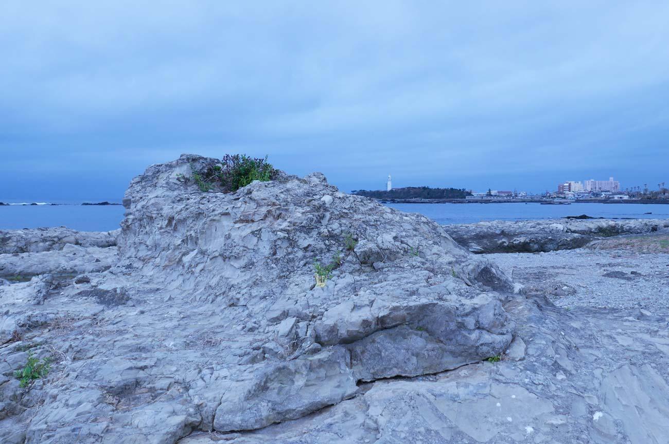 シロウリ貝の化石が見られる岩