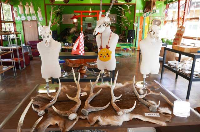 鹿の角と頭蓋骨