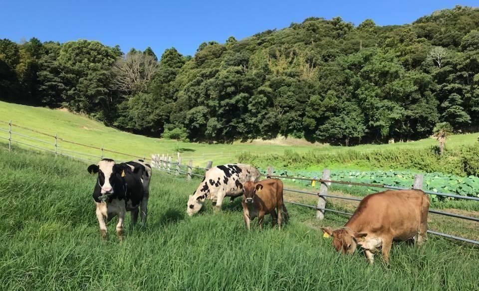 須藤牧場アイスカフェ CowBoy 10周年オンラインイベント