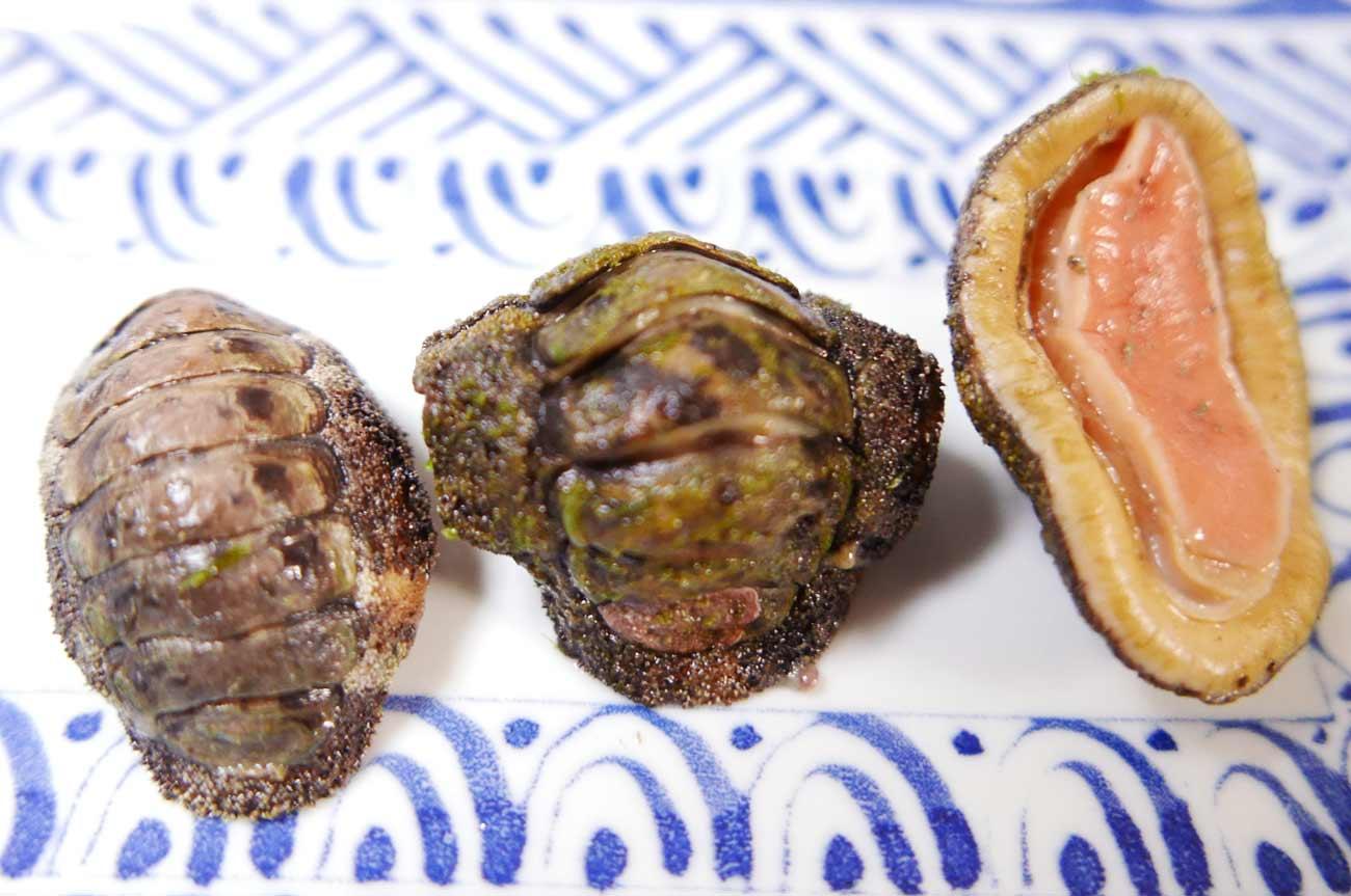 ひざら貝の表と裏