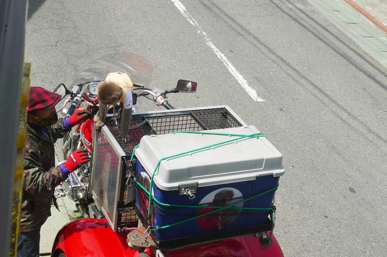 サルとバイクの旅