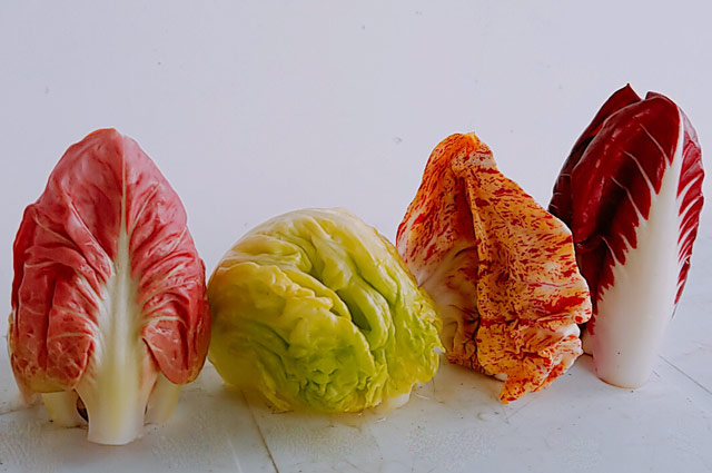 チコリ各種