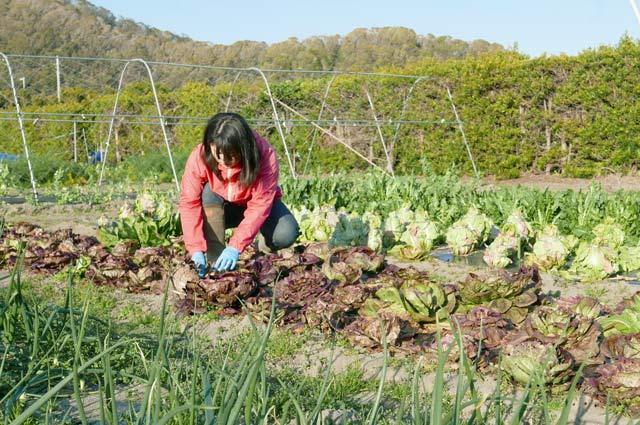 野菜を収穫する足達さん