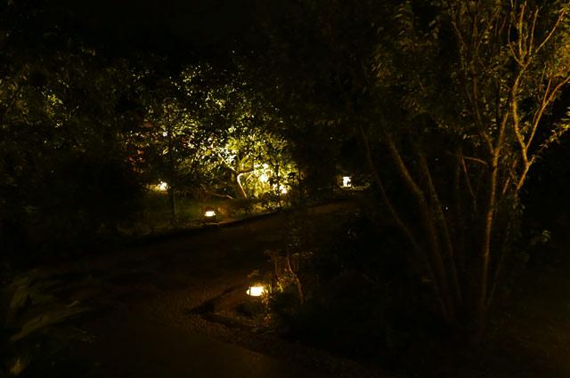 ライトアップされた庭園