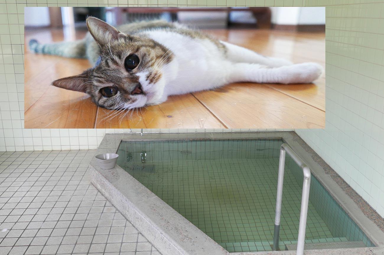 粟斗温泉の浴槽とネコのミーちゃん
