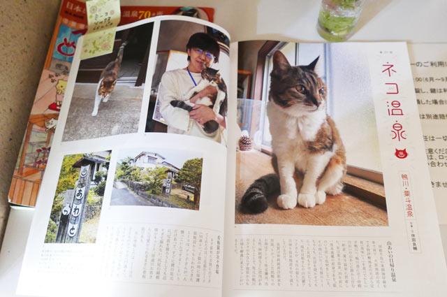 雑誌猫びより