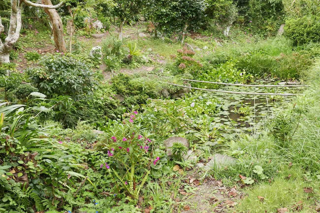 本堂左の池