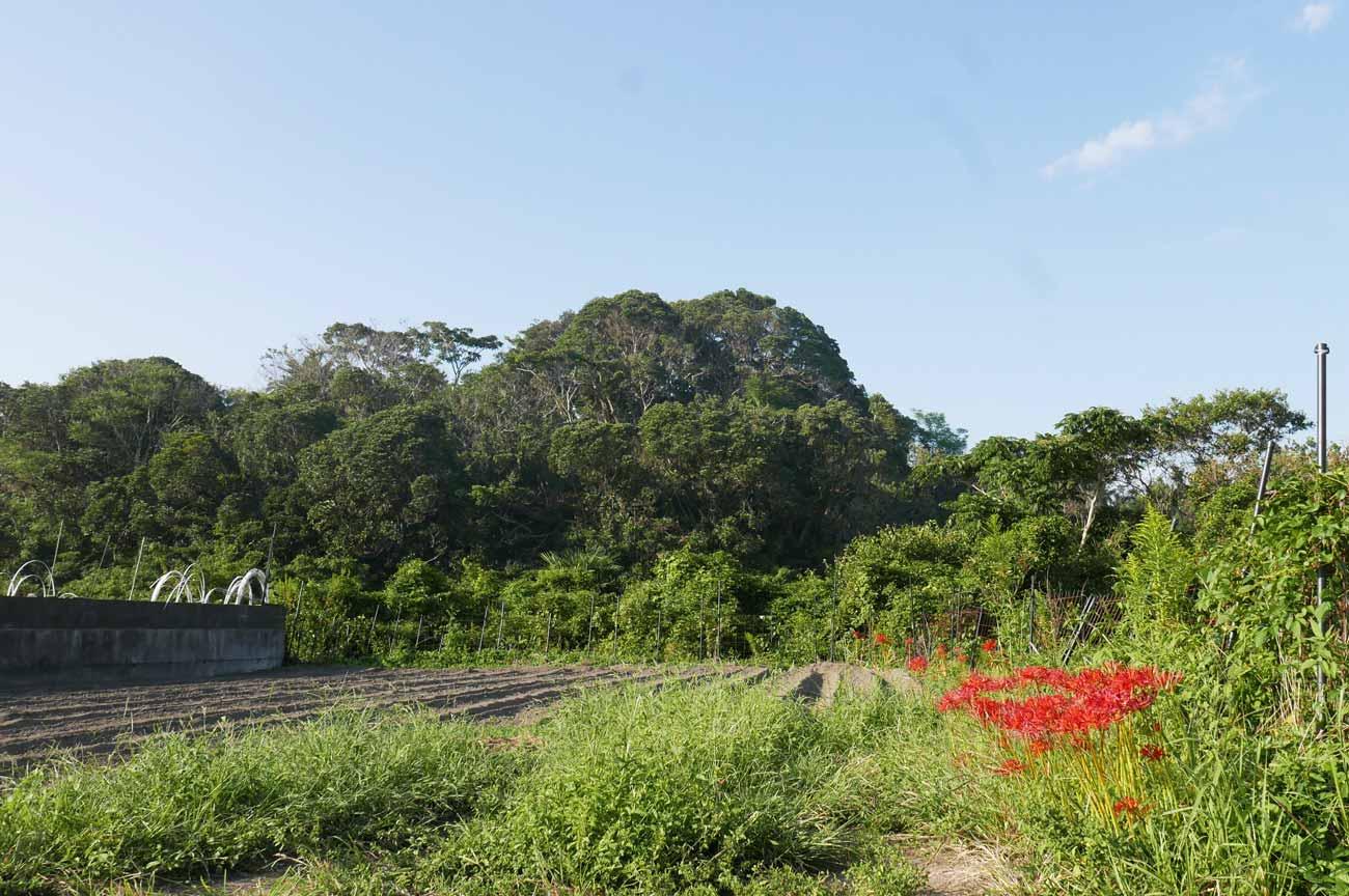 UMIKAZEの小山