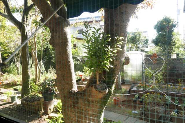 CaSaの庭