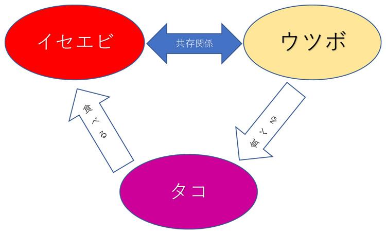 うつぼとイセエビとタコの関係図