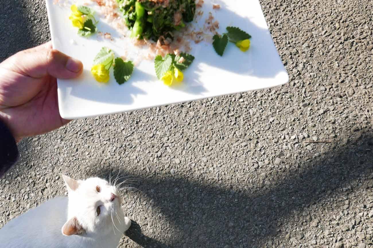 エサをねだる猫