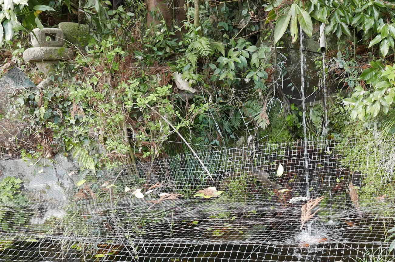 鳥居前の湧き水