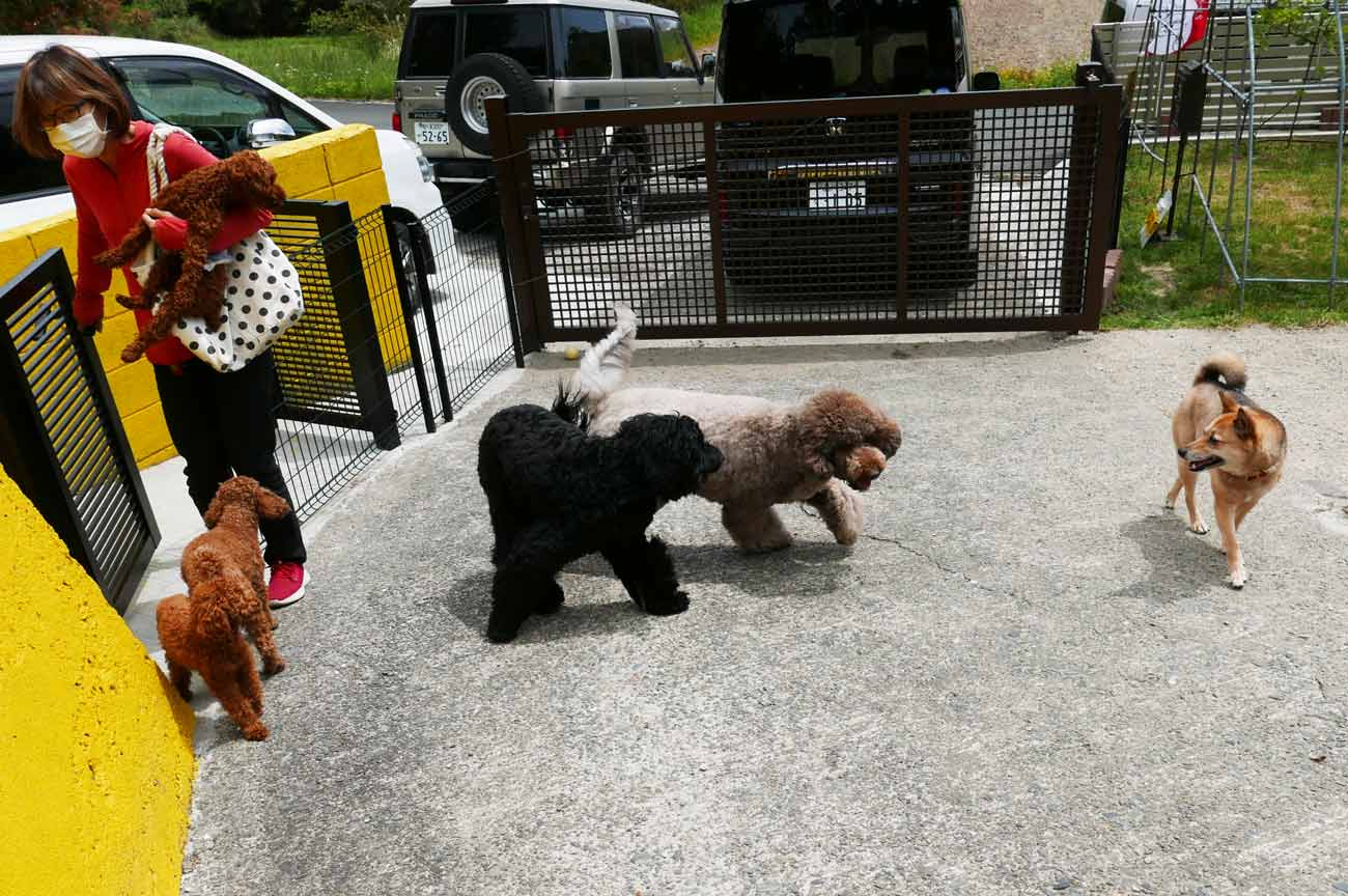 ご主人様を出迎える犬たち