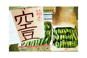 空豆/蚕豆【房州の食材】