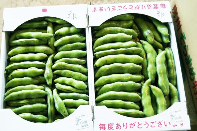箱売りの空豆