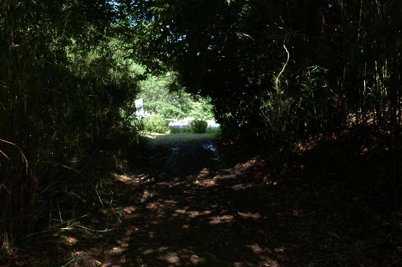 花菖蒲園の入口