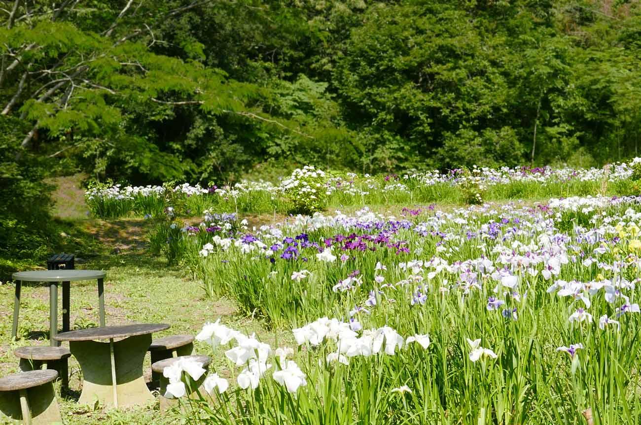 花菖蒲園のテーブルとベンチ