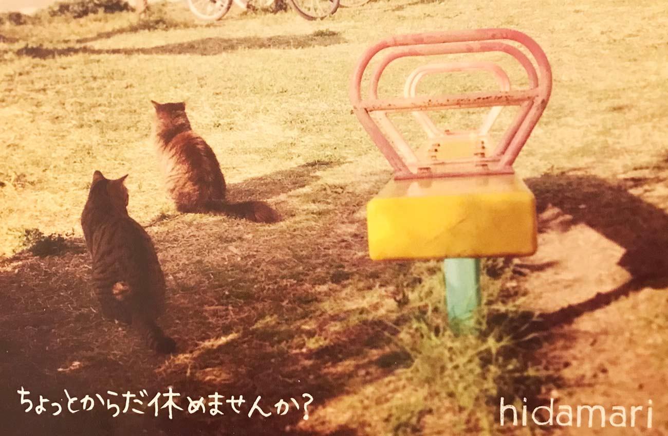 猫のリフレッシュイメージ