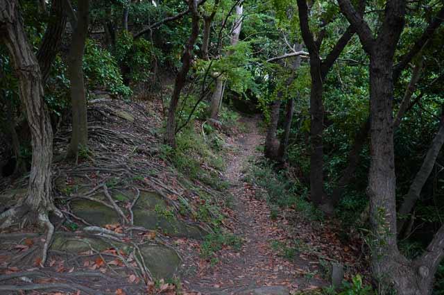 クヌギとコナラの林