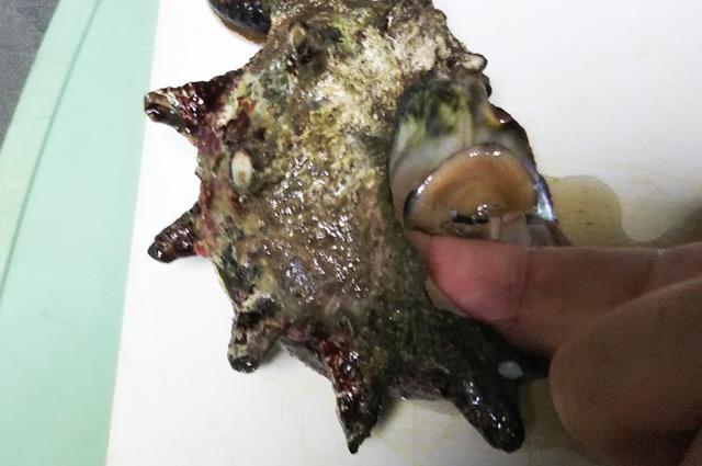 殻の中に指を入れる