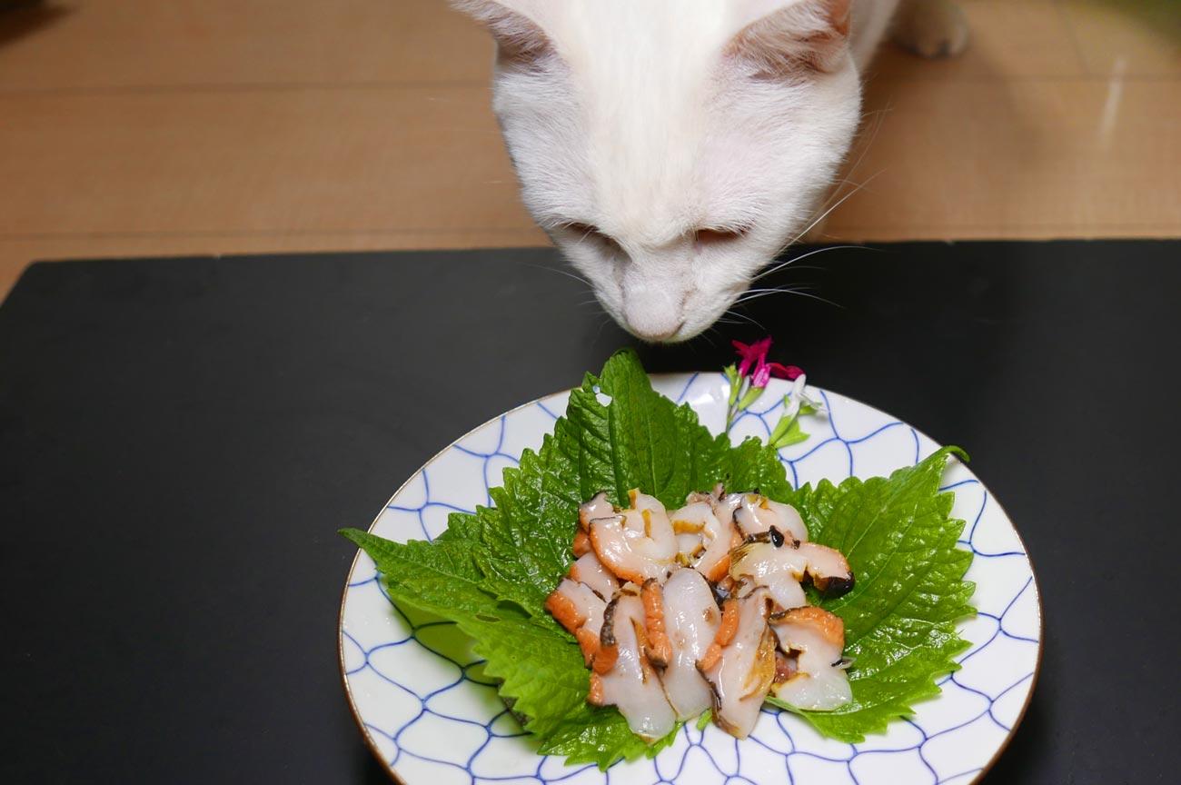 サザエを食べようとする猫
