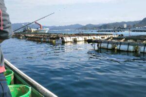 勝山かかり釣りセンター【和田釣具店】